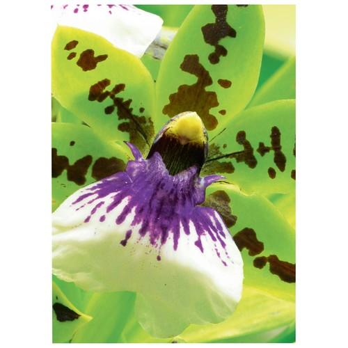 Fotopapier Inkjet Premium 10x15cm 250g weiß seidenmatt Zweckform C2552-50 (PACK=50 BLATT) Produktbild Additional View 2 L