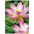 Fotopapier Inkjet Premium A4 300g weiß high-glossy Zweckform 2482-20 (PACK=20 BLATT) Produktbild Additional View 2 S
